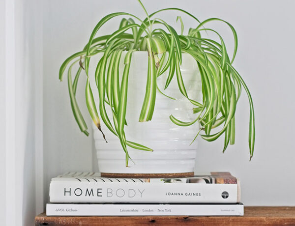 plant on bench with books