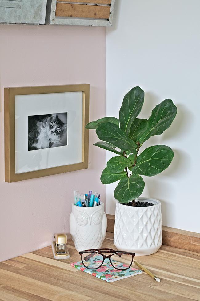 fiddle leaf fig in white planter pot on desk